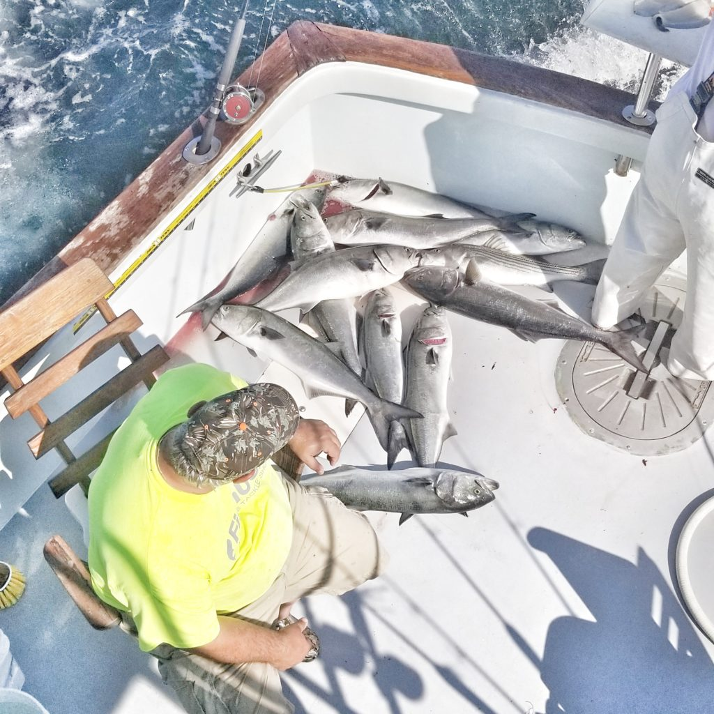 Bluefishing Charters Connecticut